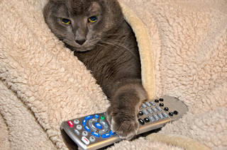 TVのリモコンで一番よく押すボタンは何?アンケートしてみたら意外な結果が!