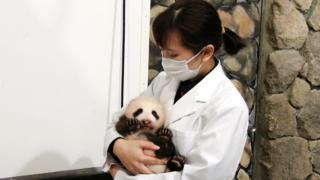 上野パンダに赤ちゃん誕生!コロナ禍での出産の大変さをある動画から読みとる